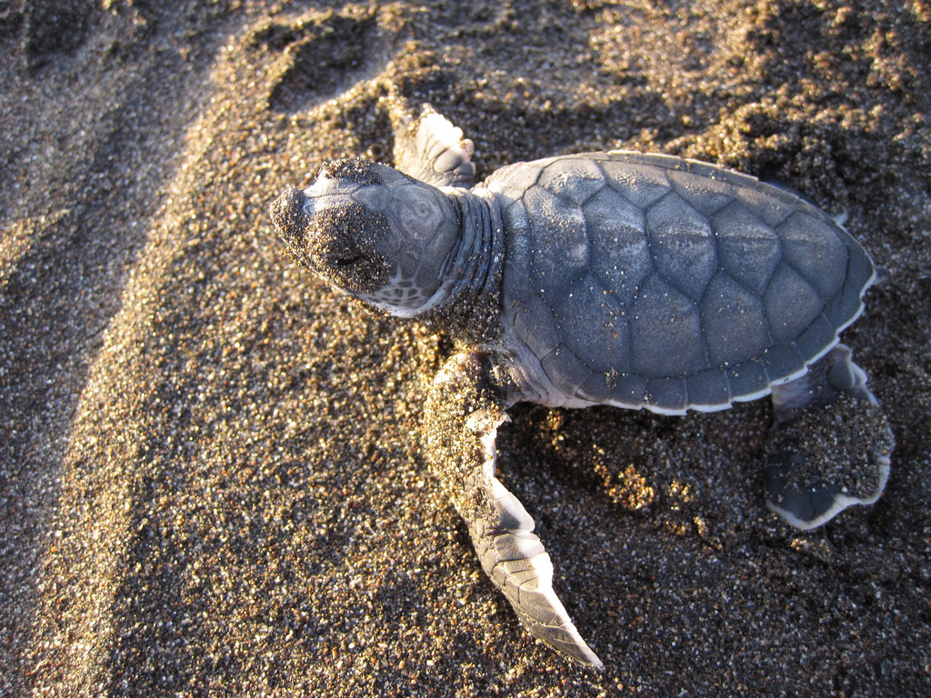 Sea Turtle Tagging Study - Department of Natural Resources