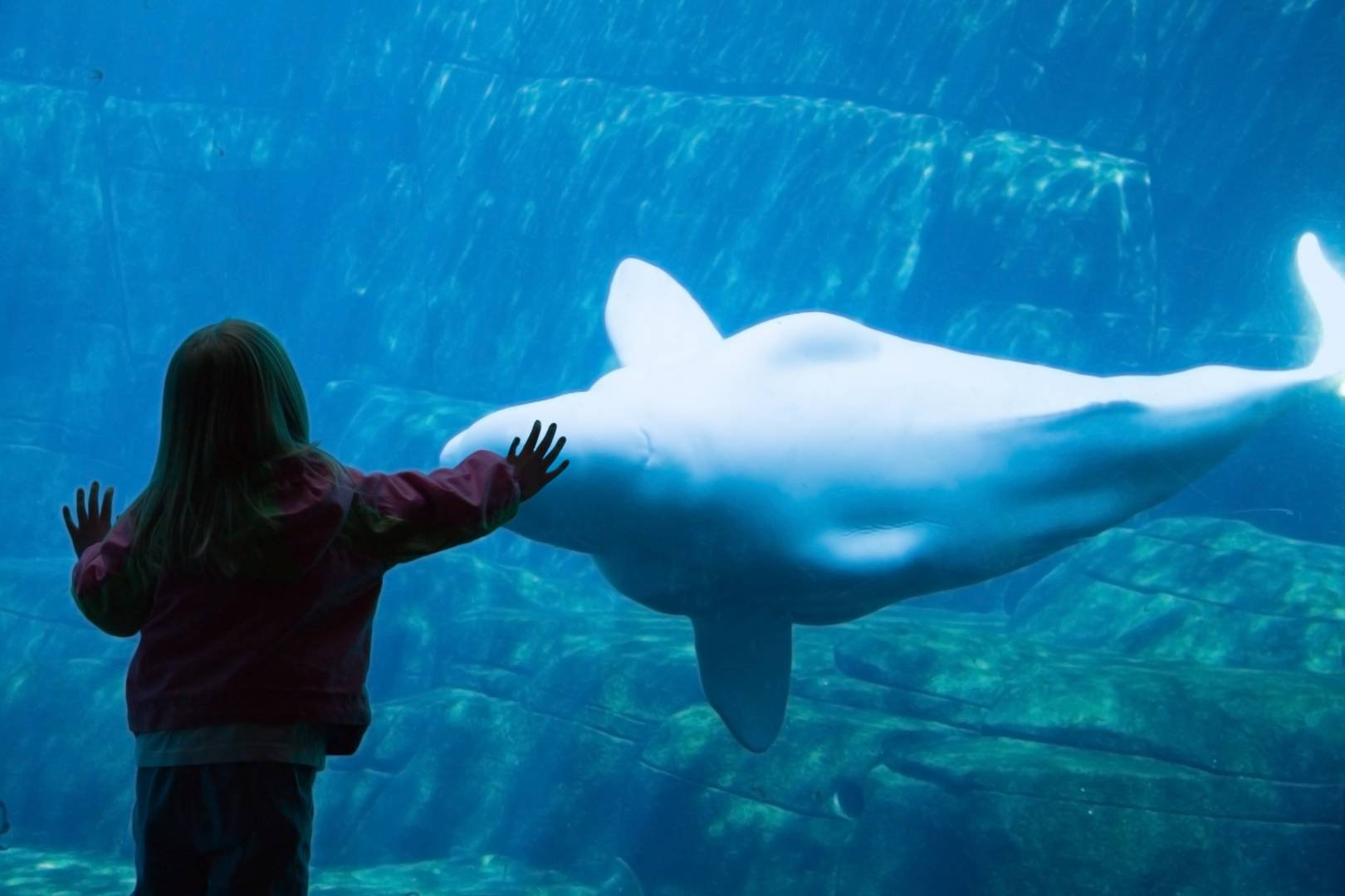 Fish aquarium vancouver - Vancouver Aquarium Bucks National Trend By Keeping Whales And Dolphins Georgia Straight Vancouver S News Entertainment Weekly