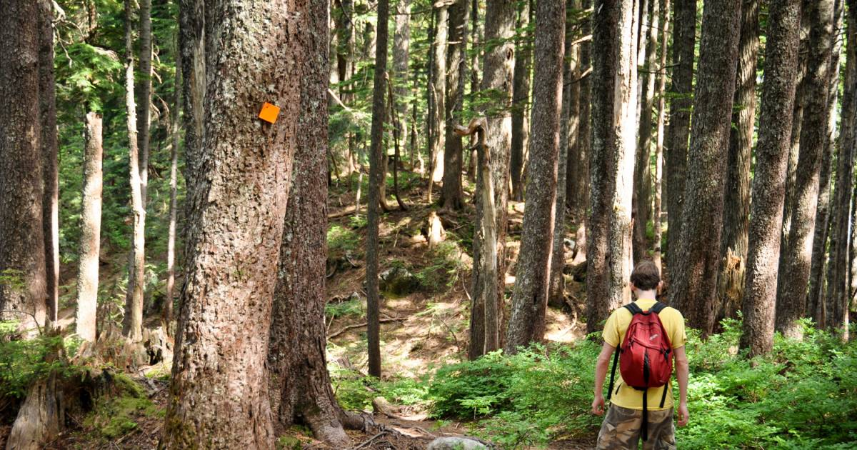 Pacific Crest Trail Inspires Long Distance Hikes In B C