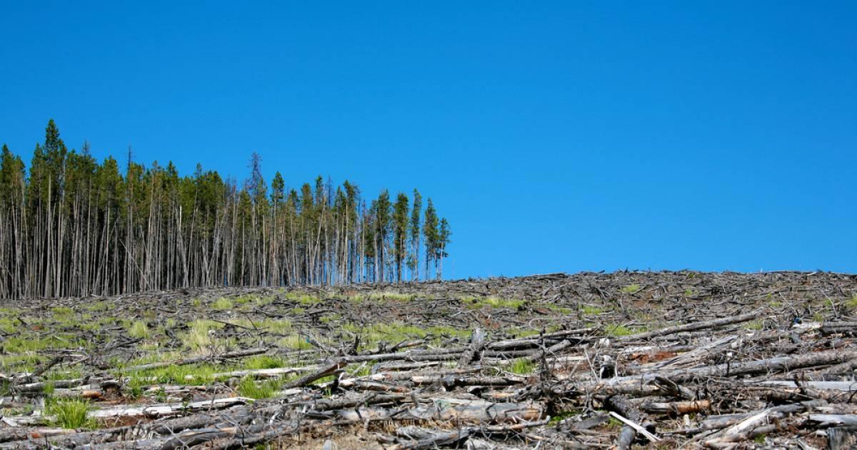 Картинки вырубка лесов экологическая проблема, отправить открытку сообщением