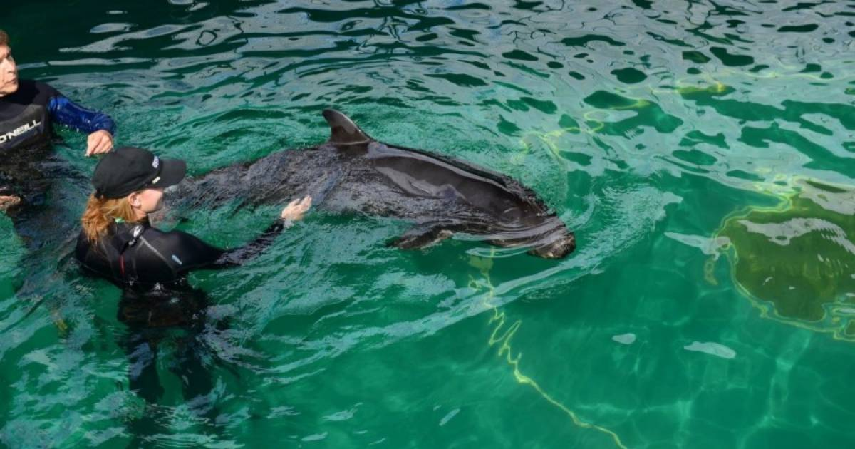 Protesters respond to Vancouver Aquarium lawsuit with demonstration in Stanley Park