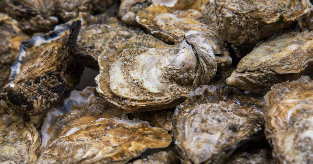 Specific Pacific oysters from Richmond seafood companies recalled in