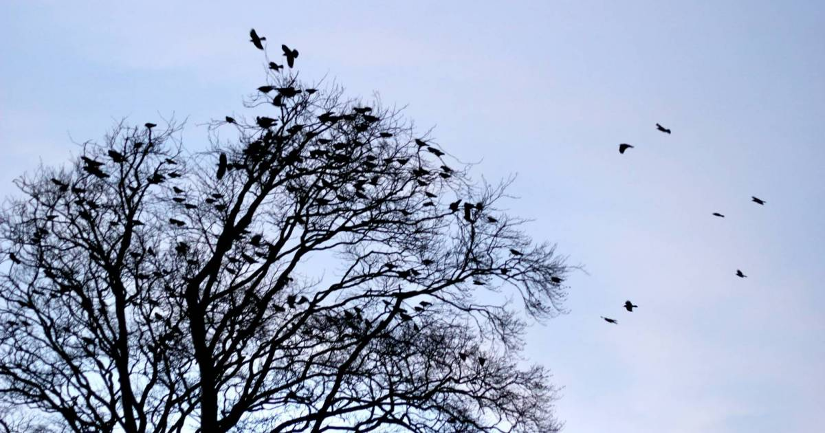 Follow Vancouver's notorious crows on your bike to see where they hide at night—all of them