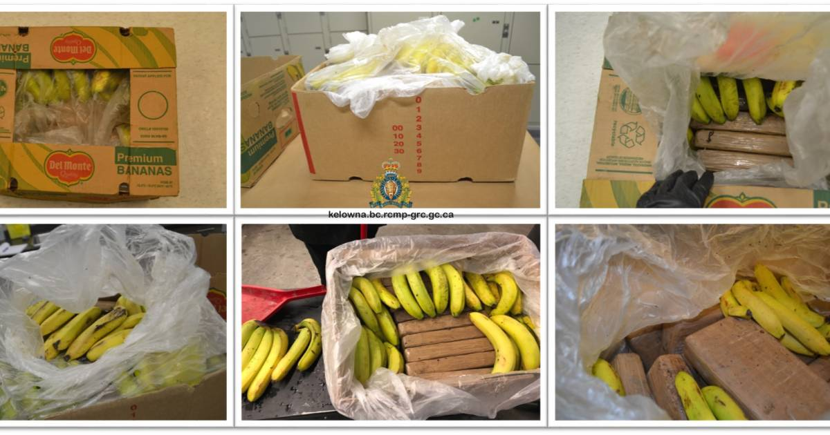 This shipment is bananas: Kelowna grocers receive 21 bricks of cocaine in fruit delivery