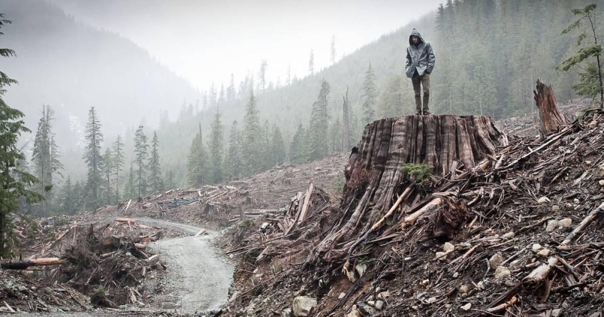 Neil Young, Greta Thunberg, Bryan Adams, Margaret Atwood plead with Premier Horgan to halt old-growth logging
